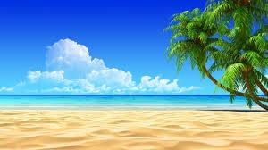 2560x1440 California Palm Trees Wallpaper 2560A 1440 Beach Wallpapers 32