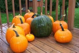 Varieties Of Pumpkins by Pumpkin Colors Orange White Blue Red Pumpkins