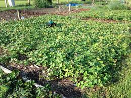 Best Pumpkin Patch Tallahassee by Edible Forest Gardens Tallahassee Com Community Blogs