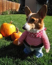 Porcupine Eats Pumpkin by Halloween Pet Contest 2008 Martha Stewart