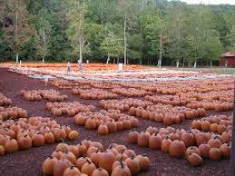 Pumpkin Patches In Bakersfield Ca by 100 Pumpkin Patch Bakersfield Ca R A M Farms Pumpkin Patch