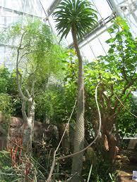 File Cleveland Botanical Garden interior 1 Wikimedia mons