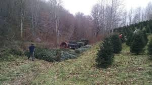 Christmas Tree Farms In Boone Nc swfl christmas trees christmas tree farm