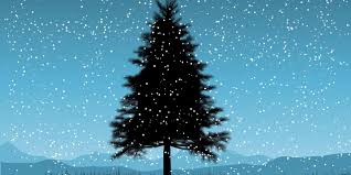 Christmas Trees Types Best by Bbc Earth Five Things You Didn U0027t Know About Christmas Trees