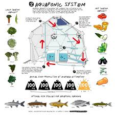 Backyard Aquaponics Exposed Photo On Cool Backyard Aquaponics Diy ... Justines Aquaponics Which Cycles Water Through A Fish Pond And Hydroponics Systems With Fish An Post About Backyard Aquaponic Kijani Grows Will Bring Small Internet Connected Aquaponics Without Simple Diy Reviewhow To Make For Sale Visit My Personal Diy How To Design Home Best 25 Ideas On Pinterest Diy E A View Topic Lyndons System Expansion Ibc Razor Family Farms Review I Could Probably Start Growing Own Tilapia Exposed Photo On Cool