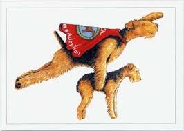 Airedale Terrier Non Shedding by 294 Best Airedales Images On Pinterest Airedale Terrier
