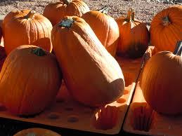 Macdonalds Ranch Pumpkin Patch Scottsdale by October 2011 Blomquist Family Adventures