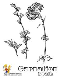 Spain Carnation Flowers At YesColoring