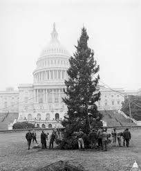 Types Of Live Christmas Trees by Capitol Christmas Tree Architect Of The Capitol United States