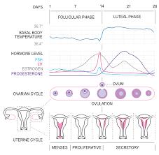 Uterus Lining Shedding Pain by The Basics Of Birth Control U2014 Pure Radiant