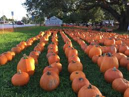Seymour Pumpkin Festival Parking by North Palm Beach Life Pumpkin Patch 2017 North Palm Beach Life