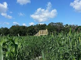 Pumpkin Patch And Corn Maze Milton Fl by 15 Unbelievable Florida Corn Mazes You Need To Visit This Fall