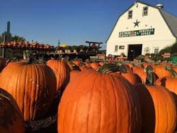 Pittsburgh Area Pumpkin Patches by 13 Charming Pumpkin Patches Near Washington Dc