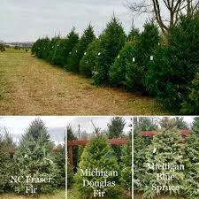 Chicago Christmas Tree Recycling 2013 by Jay U0027s Tree Farm Home Facebook