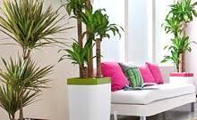 plantes vertes d interieur acheter plantes vertes plantes d intérieur jardinerie truffaut