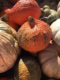 Central Wisconsin Pumpkin Patches by Caitlin Hartley Of Styled American Row Boat In Central Park View