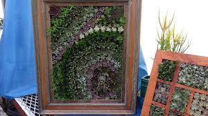 Succulents In An Old Picture Frame