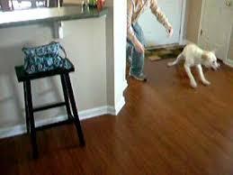 drake can t get no satistraction dog slides on a hardwood floor