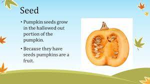 Stages Of Pumpkin Plants by The Pumpkin Life Cycle Seed Pumpkin Seeds Grow In The Hallowed
