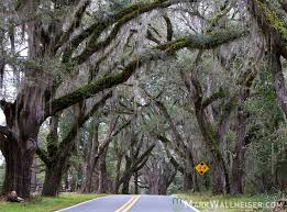 Pumpkin Patch Church Tallahassee by 223 Best Tallahassee Images On Pinterest Tallahassee Florida