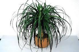 kassel pflanzen im schlafzimmer verbrauchen nachts sauerstoff