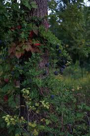 Pumpkin Moon Oak Park Il by Darker Than Green Fall