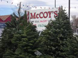 10ft Christmas Tree Canada by Photo Gallery Mccoys Christmas Trees