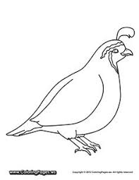 Quail Coloring Pages Free Online Printable Sheets For Kids Get The Latest Images Favorite To