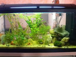 mon aquarium 100 litres et mon 20 litres