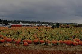 Kent Island Pumpkin Patch by Pierce Pioneer Challenge Your Sense Of Direction At South Sound