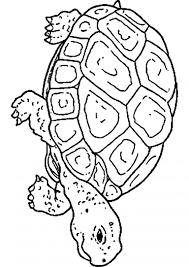 Coloriage À Imprimer Escargot Libre Coloriages Dessin