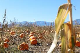 Pumpkin Patch Denver by All Home Life Posts U2014 According To D