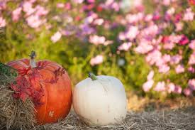 Northeast Iowa Pumpkin Patches by Bose Family Farm