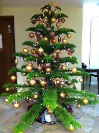 Types Christmas Trees Most Fragrant by Buy A U201ctropical Pine U201d For Christmas To Support Local Farmers