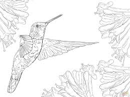 Click The Magnificent Hummingbird Coloring Pages