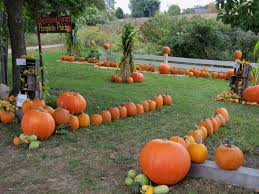 What Kinds Of Pumpkins Are Edible by Can I Use Just Any Pumpkin For Baking Food Greenhouse Megastore