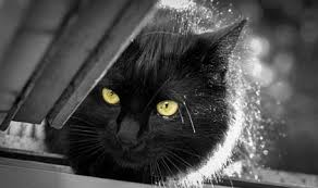 fatty liver cats liver disease in cats causes symptoms and treatment cat world