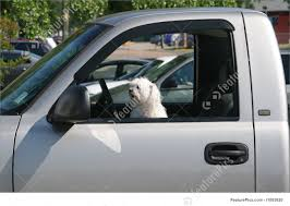 Dog Driving Truck Image Dog Truck Stock Photos Royalty Free Images Takes Semitruck For Joyride Crashes Into Tree And Parked Car Houston Food Foodie Good Hot Crate For Pickup How To Transport Dogs Safely In Quad Eastern Plant Hire Funloving Monster Truck Dog By Destroyer77 On Deviantart Stolen Reunited With Owner Days After It Was Taken The Back Of A Pickup Australia Photo 472518 Filetip Quad Trailerjpg Wikimedia Commons Home