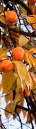 Kenova Pumpkin House 2012 by 403 Best Autumn Orange Images On Pinterest Fall Autumn Leaves