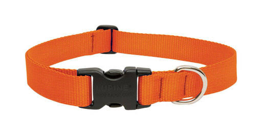 Lupine Collar Dog - Blaze Orange