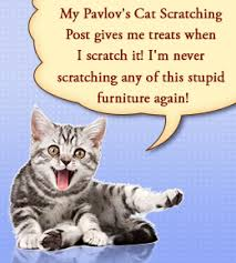How to Keep Cats Away from Furniture