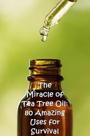 Christmas Tree Preservative Aspirin by Best 25 Melaleuca Tree Ideas On Pinterest Melaleuca Essential