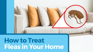 Fleas Live On Wood Floors by Flea Infestation Where Do Fleas Live In And Around Your Home Petmd