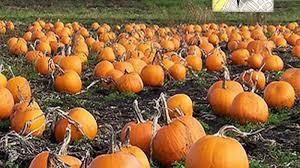 Pumpkin Patch Maryland by Maryland Washington Dc Curbed Dc