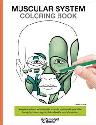 Muscular System Coloring Book Now You Can Learn And Master The With Ease While Having Fun 1st Edition