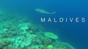 100 Maldives W Retreat Honeymoon In The And Spa YouTube