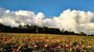 Maze Pumpkin Patch Evansville In by Basse U0027s Taste Of Country We Grow Memories Colgate Wi