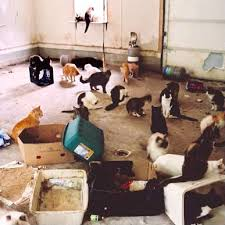 best cat litter boxes tips to keep a cat litter box from smelling how to get rid of