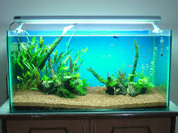 Aquascaping A 50 Gallon Tank | Fish Keeping And Aquascaping Blog Aquascaping Aquarium Ideas From Aquatics Live 2012 Part 2 Youtube How To Make Trees In Planted Aquarium The Nature Style Planted Tank Awards Ultimate Shop In Raipur Fuckyeahaquascaping My 90p Tank One Month See Day 1 Here Best 25 Ideas On Pinterest Home Design Designs Aquascape Happy Journey By Adil Chaouki 1ft Cube Aquascaping Fuck Yeah Anyone Do For Your Fish Srt Hellcat Forum Archives Javidecor