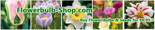 cheap bulbs from buy for 0 95 per package at flowerbulb